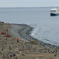 Chilean cruise ship Mare Australis anchors near huge Magellanic Penguin rookery on Magdalena Island in the Strait of Magellan, Chile.