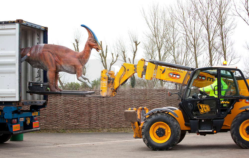 © Licensed to London News Pictures. 1/3/2013. Twycross, Warwickshire, UK. Fourteen dinosaurs arrived at Twycross Zoo in the Midlands earlier today after making the month long journey fron Texas in the U.S.A. The largest, a Tyrannosaurus Rex weighing 6700lbs was one of the first to be unloaded from three lorries that had made the journey along the motorway overnight from London Thames Port.  The dinosaurs will form part of a major exhibition that will open at the zoo in Easter. Dinosaurs arriving, included, Tyrannosaurus Rex, Stegosaurus with it's baby, Citpati, Dilophosaurus, Coelophysis, Edmontonia, Deinonychus Slasher, Brachiosaurus, Carnotaurus, Baryonyx, Styracosaurus, Parasaurolophus. Photo credit : Dave Warren/LNP