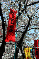 Sakura or decorative cherry blossoms bloom each springtime in Japan, usually in early April. Not only are they beautiful, but they have significance to the Japanese as their bloom only lasts a few days and symbolize the temporariness of beauty or happiness.