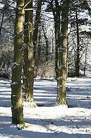 Snow covered trees on Killiney Hill Dublin Ireland November 2010