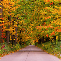 """""""Color Stroll""""<br /> <br /> Enjoy the beauty of a quiet autumn stroll along this tree lined lane in the Michigan countryside! Wonderful fall color is everywhere!!<br /> <br /> Autumn Landscapes by Rachel Cohen"""