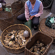 China, Cities,Street Market in the city of Shexian. Baby chicks for sale.