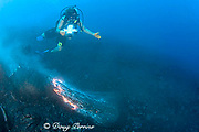 videographer Shane Turpin films pillow lava erupting underwater at Kilauea Volcano Hawaii Island ( the Big Island ) Hawaii U.S.A. ( Central Pacific Ocean ) MR 382