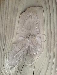 Knot Detail, Castine, Maine, US