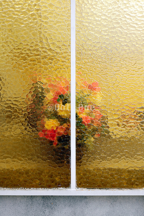 colorful flowers behind distortion glass