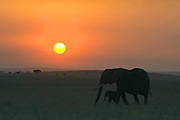 African Elephant<br /> Loxodonta africana<br /> Mother and calf at sunset<br /> Masai Mara Conservancy, Kenya