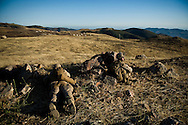 Marines from the 2nd Battalion, 5th Marine Regiment take up positions overlooking the battlefield during live-fire exercises at Camp Pendleton.