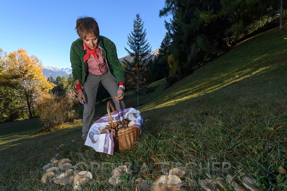 Rosemarie Kuhn is harvesting mushrooms in a forest, Parc Ela, Grisons, Switzerland