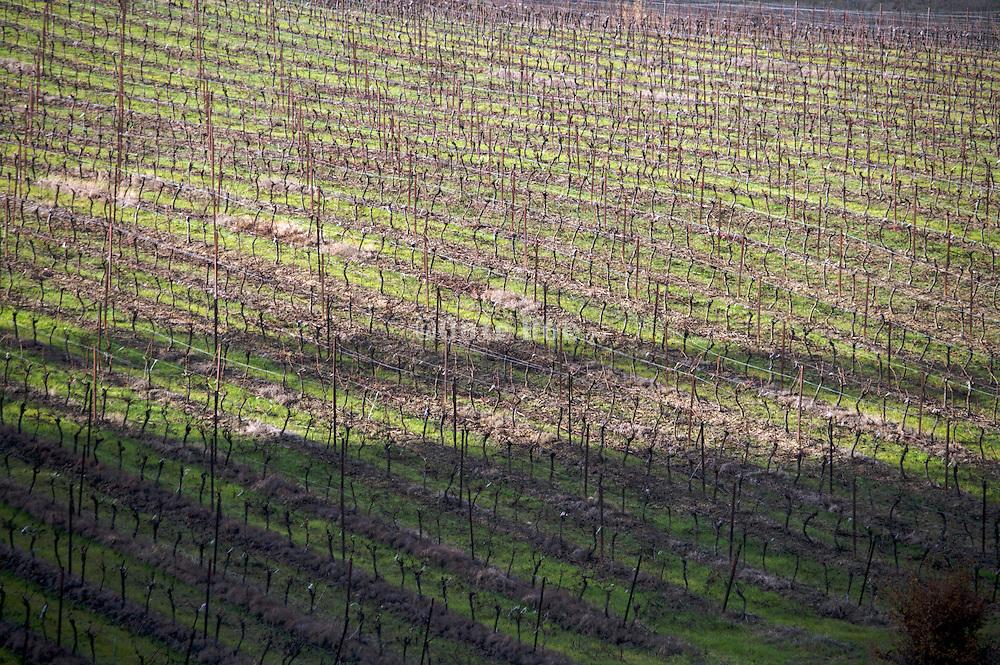 bare vineyard during late fall season