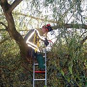 NLD/Huizen/20061031 - Brandweer Huizen ontmantelt een tak van een boom welke is losgelaten bij de 1e najaarsstorm Hoefblad Huizen