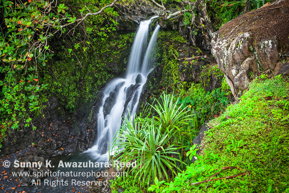 Artesian Falls, Road to Hana area, Maui, Hawaii.