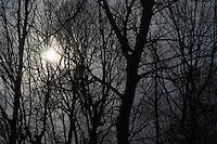 Winter trees into the sun.