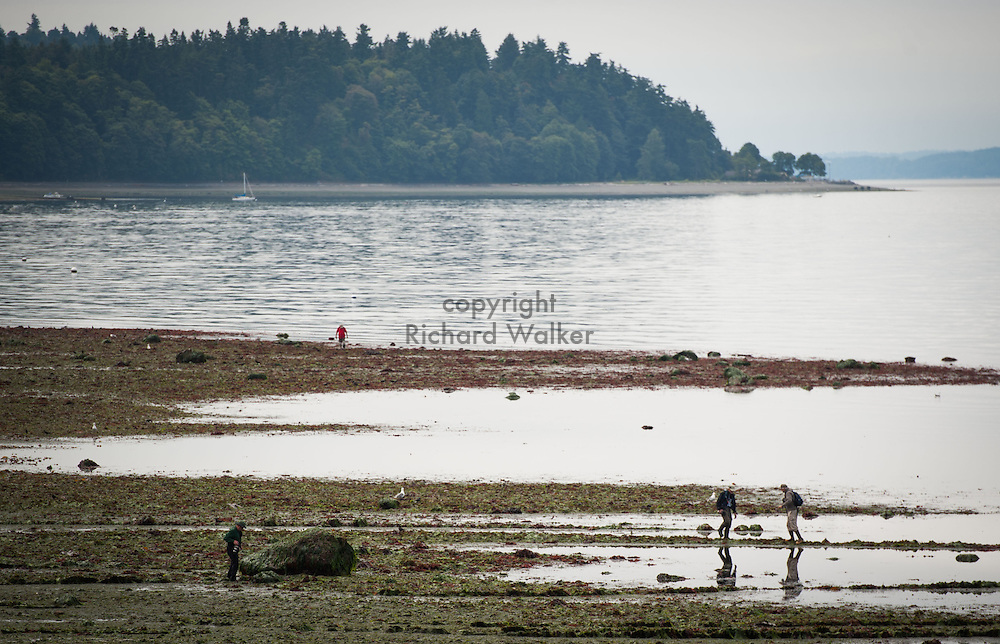 2013 July 22 - People explore along the shore of Alki Beach near Me Kwa Mooks Park, Seattle, WA, during low tide. In the background is Lincoln Park. By Richard Walker