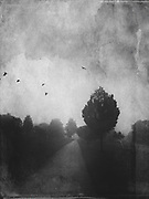 Road through a misty landscape on a Spring morning - black and white photograph