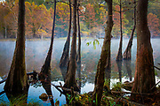 """Beavers Bend State Park is a 1,300 acres Oklahoma state park located in McCurtain County. It is approximately 10.5 miles north of Broken Bow. It was established in 1937 and contains Broken Bow Lake. Built on the site of an old Choctaw settlement, Beavers Bend State Park was named after John T. Beavers, a Choctaw intermarried citizen. The """"bend"""" in the park's name refers to an area of the park where a portion of Mountain Fork River meanders sharply, making an almost 180-degree turn. This area is commonly known as the River Bend, and is a popular area for trout fishing, canoe rentals, and swimming. Also in the River Bend area is the Broken Bow Hydroelectric Plant, which generates energy from the waters of Broken Bow Lake.<br /> The local rock formations are some of the most distinctive in the state of Oklahoma. Just north of Broken Bow, sedimentary rock has been thrust upward due to an ancient collision of the North American and South American Plates, forming what is now the Ouachita Mountains. Evidence of what is called the Ouachita orogeny can be seen all over the park, where some layers of rock can be seen tilted up at angles of about sixty-degrees. These geologic features can be easily viewed around Broken Bow Lake and Mountain Fork River, where erosion has left much of the rock exposed."""