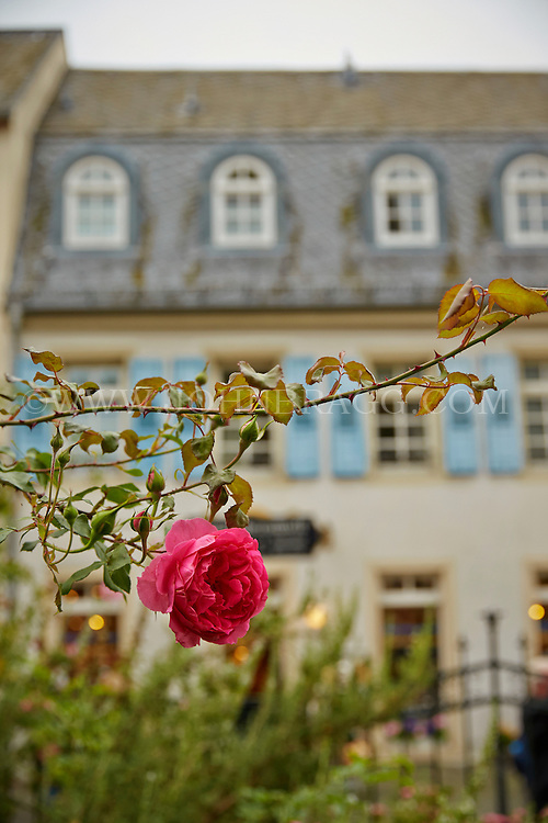 View of a red rose, and the MusicBox World Museum faded into the background, Rüdesheim, Germany (Vertical).