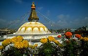 Marigolds, Bhodnath Buddhist temple, Kathmandu, Nepal