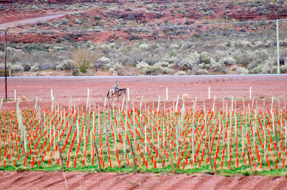View of the vineyards and the mountain showing the red soil that has given the name to the winery. man passing riding on a horse. Bodega Del Anelo Winery, also called Finca Roja, Anelo Region, Neuquen, Patagonia, Argentina, South America