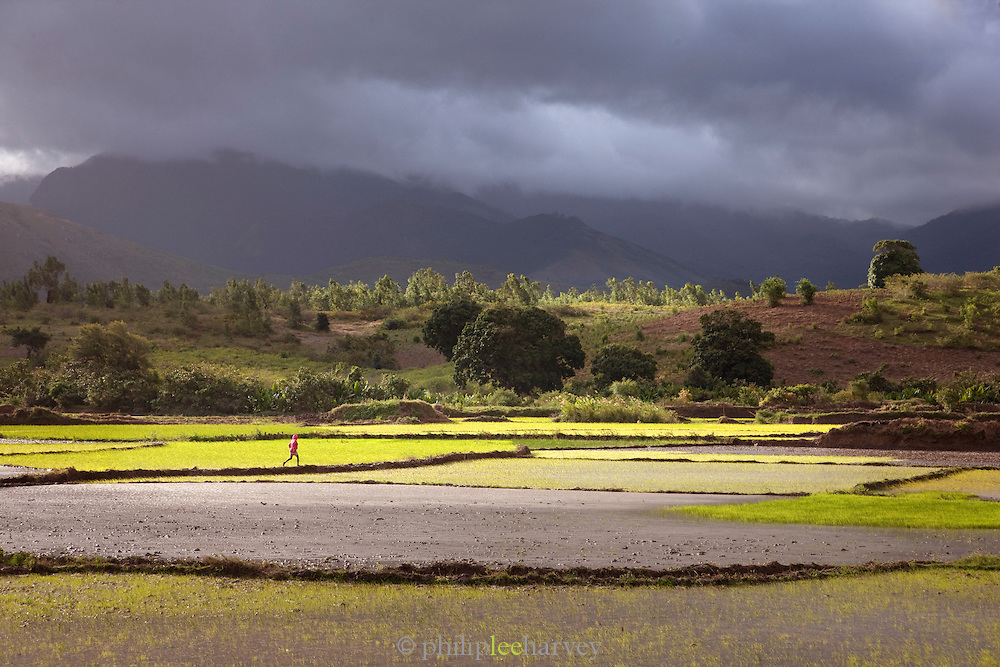 A man runs across a paddy field, with stormy skies beyond, near Fort Dauphin, Madagascar