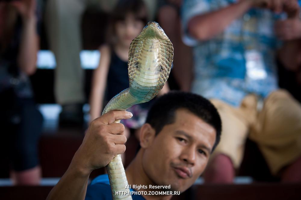 Snake charmer holding a snake in his hand on Phuket snake farm, Thailand