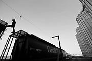 Dan Laramee walks on grain railway cars as he loads wheat from the Canadian prairies at the Pioneer grain elevator in Carseland, Alberta, October 2, 2011.  REUTERS/Todd Korol (CANADA)