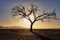 Panoramic view of sand dunes and bare tree during sunset at Sossusvlei, Namibia, Africa