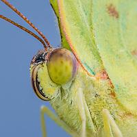 Lepidoptera - butterflies and moths