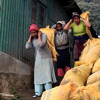 Asia, India, Darjeeling. Women carrying cement bags to work on landslide and road repair in Darjeeling.