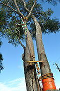 Public artwork on display as part of the annual Trunk Art Wrap Festival in Bassendean, Western Australia. All artworks are made entirely of recycled industrial or domestic waste materials.<br /> <br /> In this piece, a rope swing, too high for anyone to reach.
