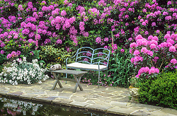 Seating area next to the pond backed by Rhododendron ponticum.