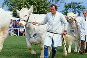 Parade of champion cows at Three Counties Show agricultural and farming event at Malvern in Lincolnshire, UK
