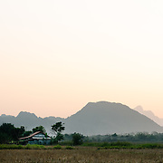 Rice field with karst mountain background in Vang Vieng