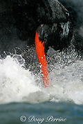 lava from Kilauea Volcano empties into the Pacific Ocean <br /> through a lava spigot at the end of a lava tube, Hawaii Volcanoes National Park, Hawaii Island ( the Big Island ), <br /> Hawaii, U.S.A. ( central Pacific Ocean )