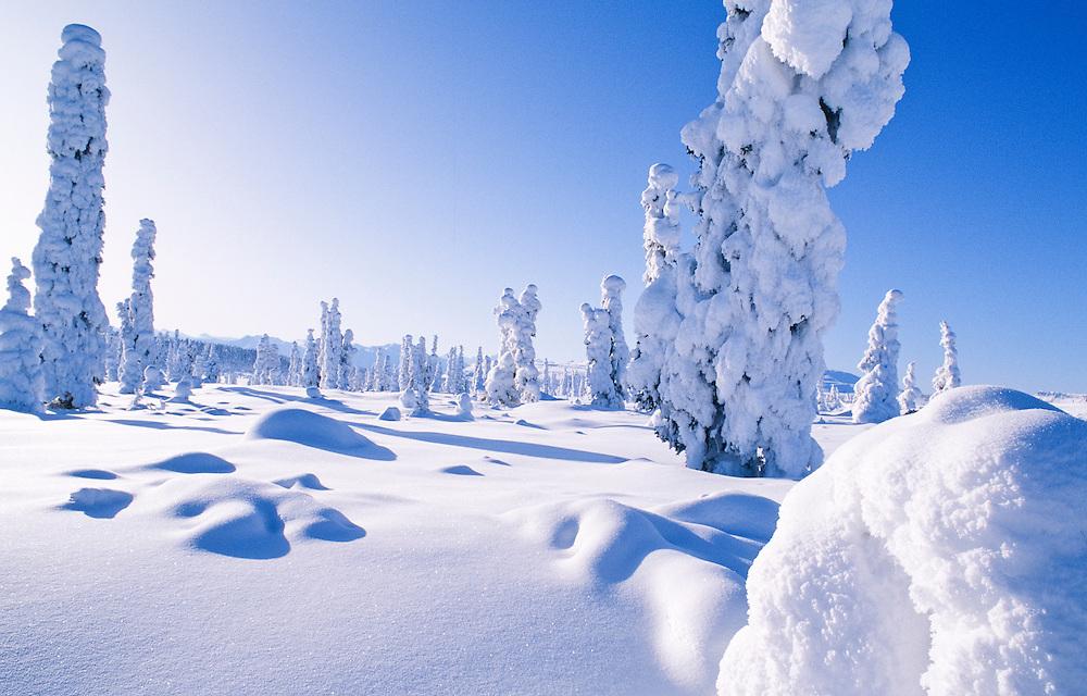 Alaska. Eureka. Winter Scenic of a taiga forest scene in Arctic Alaska