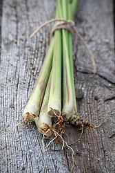 Cymbopogon citratus - Lemon grass