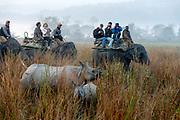 Tourists going on elephant safari and meeting the Indian rhinoceros (Rhinoceros unicornis) in Kaziranga NP, Assam, India.