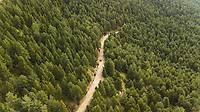 Aerial view of car driving through pines national park, Spain.