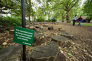 Part of urban park being managed for wildlife conservation. Dead wood provided for insects. Hackney, London, UK
