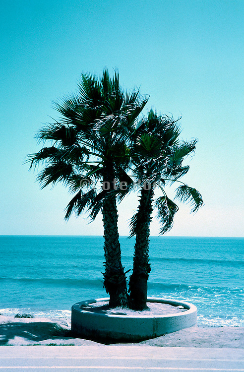 palm trees at the ocean