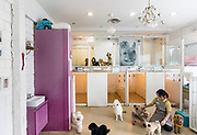 Singapore, Petopia,  Singapore's finest Holistic Pet Wellness Centre, offering animal companions the best in styling, grooming, spa, therapy and pet hotel services. photographis set