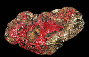 Cuprite in the variety known as Chalcotrichite, found at Cornwall, England. Cuprite has been a major ore of copper and is still mined in many places around the world. Of all the copper ores except for native copper, cuprite gives the greatest yield of copper per molecule. Varieties, such as chalcotrichite, show tufts of needle-like crystals that have a beautiful red colour and a special sparkle that make them popular display cabinet specimens.