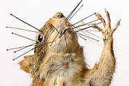 FEATURE: Second Life - Taxidermy