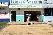 """11 NOVEMBER  2004 - TAPACHULA, CHIAPAS MEXICO: A worker spreads coffee beans out to dry on the sidewalk in front of a """"coyote's"""" storefront in Tapachula, Chiapas, Mexico. Coyotes are the middlemen in small scale Mexican coffee farming. They buy coffee from small farm owners and resell it to the companies that ultimately roast, grind and package it. Most of the coyotes deal in lower grade coffees, high grade coffee is sold on a contract basis by farmers and plantation owners directly to roasters. World coffee prices have been depressed for years by over production in Brazil and Vietnam and thousands of coffee farmers in Mexico and Guatemala have been forced to emigrate to the US as undocumented workers because of the crisis in the coffee industry. Many of the plantations in Mexico and Guatemala have been forced to closed because of the crisis. PHOTO BY JACK KURTZ"""