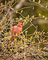 Early Spring; Backyard; Wildlife