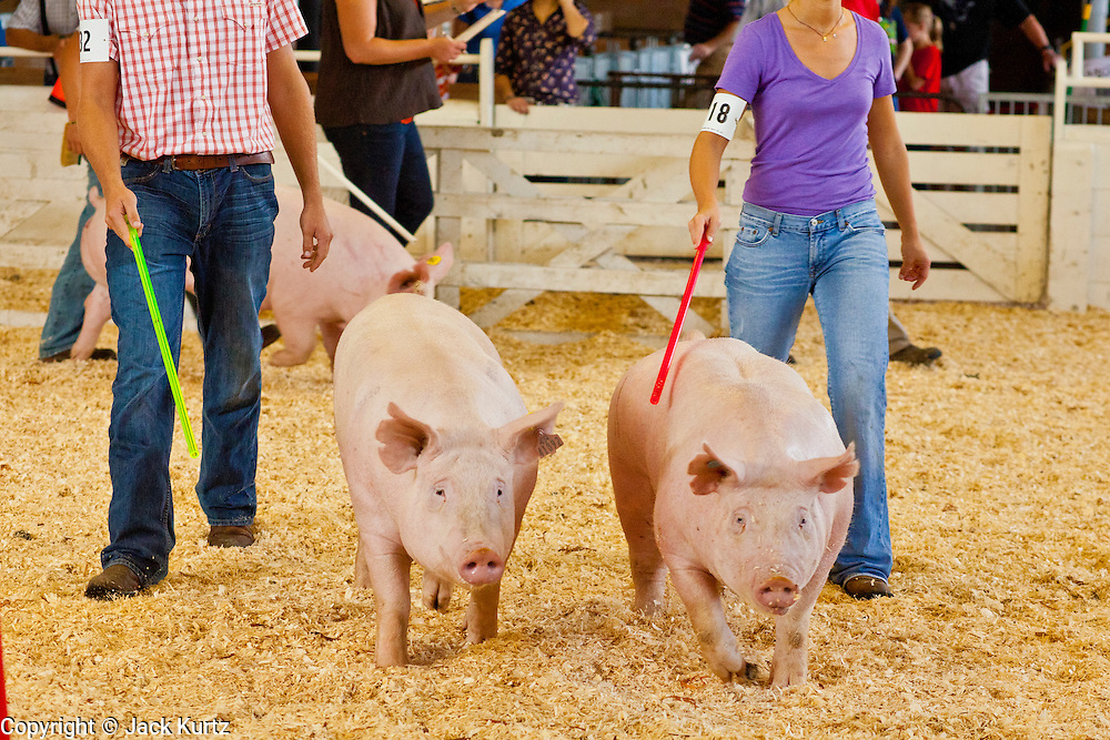 "03 SEPTEMBER 2011 - ST. PAUL, MN: 4-H members show the pigs at the Minnesota State Fair, Sept. 3. The Minnesota State Fair is one of the largest state fairs in the United States. It's called ""the Great Minnesota Get Together"" and includes numerous agricultural exhibits, a vast midway with rides and games, horse shows and rodeos. Nearly two million people a year visit the fair, which is located in St. Paul.   PHOTO BY JACK KURTZ"