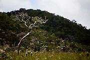Alto Paraiso de Goias_GO, Brasil...Parque Nacional da Chapada dos Veadeiros em Goias...The Chapada dos Veadeiros National Park in Goias...Foto: JOAO MARCOS ROSA / NITRO..