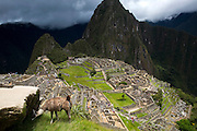A llama is photographed at the ancient site of Machu Pichu in Cusco, Peru.