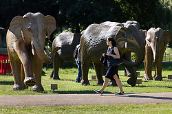 © Licensed to London News Pictures. 14/06/2021. London, UK. A visitor to St James' Park walks amongst elephant sculptures in the morning sunshine in central London. Another day of high temperatures is expected in the UK. Photo credit: Peter Macdiarmid/LNP
