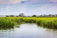 vibrant green marsh grass lines the edge of a creek in a coastal salt marsh.