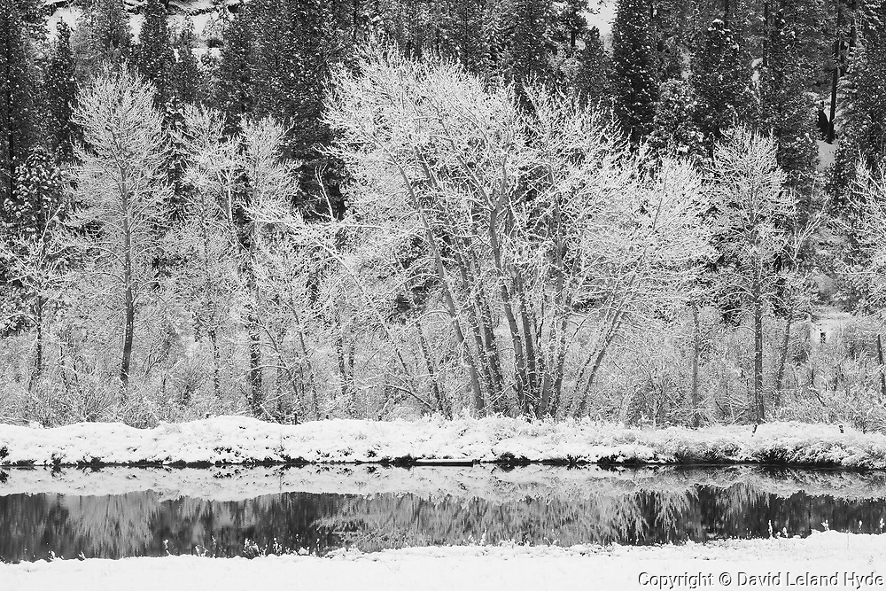 Cottonwood Trees and Heart K Pond, Heart K Ranch, Genesee Valley, Winter Scenes, California Mountains, Sierra Nevada Mountains, Black and White Photography